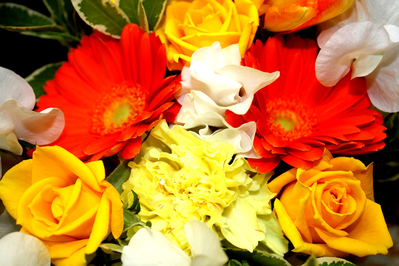今月のおすすめ花